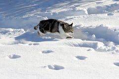 In de sneeuw Royalty-vrije Stock Afbeeldingen