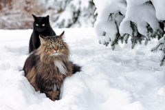 In de sneeuw Stock Foto's