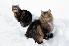 In de sneeuw Stock Afbeeldingen