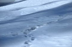 De sneeuw Stock Foto