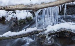De sneeuw behandelde bevroren takken in een koude dag dichtbij de kleine lente, royalty-vrije stock afbeelding
