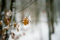 De sneeuw behandelde bladeren in een bos Royalty-vrije Stock Foto