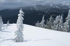 De sneeuw behandelde boom in de winterscène bij de bovenkant van de stijging van de Hondberg Royalty-vrije Stock Foto