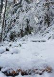 De sneeuw behandelde Burley-bergsleep, de winter van 2018, Washington, de V.S. stock afbeelding