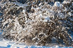 De sneeuw behandelde leafless bomen in de winterbos Royalty-vrije Stock Foto