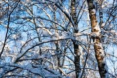 De sneeuw behandelde leafless bomen in de winterbos Royalty-vrije Stock Afbeeldingen