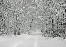 De sneeuw Behandelde Luifel van de Boom Royalty-vrije Stock Foto's