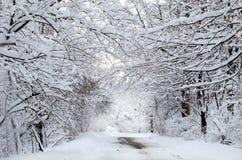 De sneeuw behandelde magisch landschap Stock Afbeelding