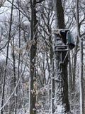 De sneeuw behandelde oude de jachttribune royalty-vrije stock afbeeldingen