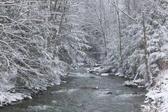 De sneeuw behandelde pijnboombomen aan de kant van een rivier in de winter. Stock Afbeeldingen