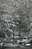 De sneeuw behandelde pijnboombomen aan de kant van een rivier in de winter. Stock Fotografie