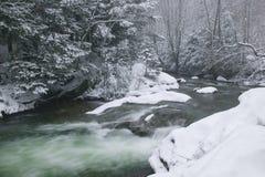 De sneeuw behandelde pijnboombomen aan de kant van een rivier in de winter. Stock Foto