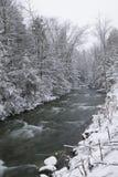 De sneeuw behandelde pijnboombomen aan de kant van een rivier in de winter. Stock Afbeelding