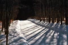 De sneeuw behandelde Schaduwrijke Weg Royalty-vrije Stock Afbeelding