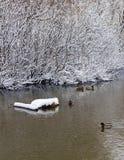 De sneeuw behandelde takken van de bomen die in de stroom worden weerspiegeld Royalty-vrije Stock Foto