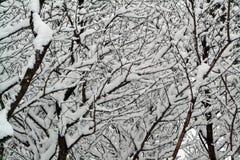 De sneeuw behandelde takken van de kersenboom royalty-vrije stock fotografie
