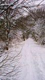 De sneeuw behandelde tree-lined steeg van het land Stock Foto's