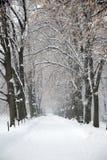 De sneeuw Behandelde Weg van de Winter onder Bomen Stock Fotografie