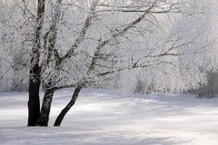 De sneeuw behandelde winters bos Stock Afbeeldingen