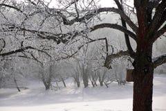 De sneeuw behandelde winters bos Stock Afbeelding