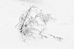 De sneeuw bond kleine boom stock foto's