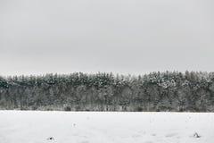De sneeuw bosbomen van de de winterfee in witte robes stock foto