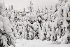 De sneeuw bosbomen van de de winterfee in witte robes royalty-vrije stock fotografie
