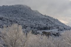 De sneeuw caped berg & bomen stock foto