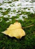 De sneeuw die van de winter naar een dalingsblad komt stock fotografie