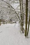 De sneeuw drijft en bomen bijeen royalty-vrije stock afbeelding