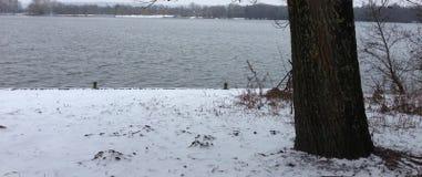 De sneeuw eijsderbeemden Stock Afbeelding