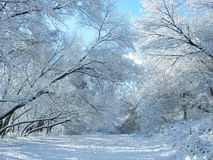 De sneeuw en de bomen van de winter. stock afbeelding