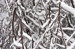 De sneeuw en het Ijs klampen zich aan Takken vast Stock Fotografie
