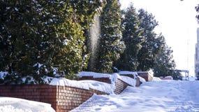 De sneeuw giet kleine sneeuwvlokken van de boom stock afbeeldingen