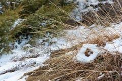De sneeuw kijkt als hart of doughnut Stock Foto