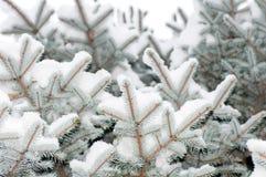 De sneeuw ligt op een tak Stock Foto
