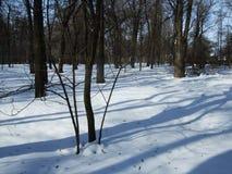 De sneeuw ligt op de grond onder de bomen in het park Royalty-vrije Stock Foto