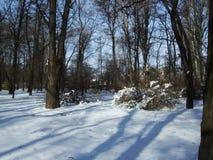 De sneeuw ligt op de grond onder de bomen in het park Stock Fotografie