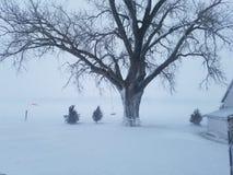 De sneeuw de mistwinter van het boomland Stock Foto's