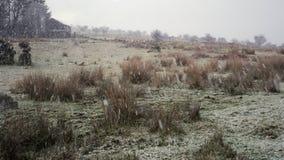 De sneeuw op Bodmin legt, 29 vast 01 2019 stock video
