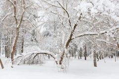 De sneeuw op een boom vertakt zich De scène van de winter Stock Afbeelding