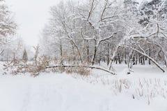 De sneeuw op een boom vertakt zich De scène van de winter Stock Foto