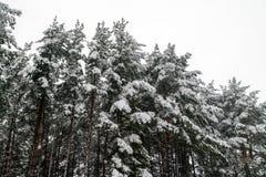 De sneeuw op nette boom vertakt zich in het hout op een grijze en koude winst royalty-vrije stock afbeeldingen