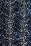 De sneeuw op nette boom vertakt zich in het hout op een grijze en koude winst royalty-vrije stock fotografie