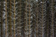 De sneeuw op nette boom vertakt zich in het hout op een grijze en koude winst royalty-vrije stock afbeelding