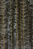 De sneeuw op nette boom vertakt zich in het hout op een grijze en koude winst royalty-vrije stock foto's