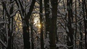 De sneeuw valt langzaam onder de bomen in het bos stock footage