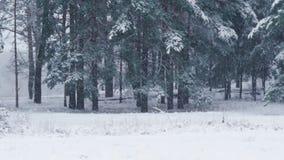 De sneeuw valt langzaam op bomen op een de winterdag Snow-covered bomen in de bossneeuwval stock video