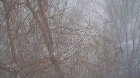 De sneeuw valt langzaam tegen de boom stock video