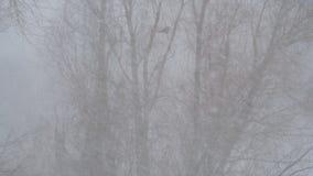 De sneeuw valt tegen de boom stock footage